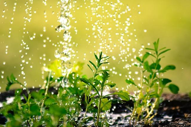 ¿Qué agua usar par regar las plantas?
