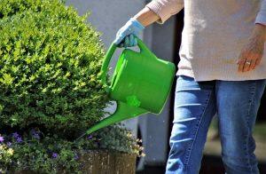 que agua usar para regar las plantas
